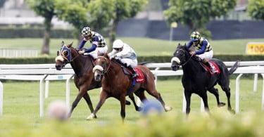 wedden-op-paarden