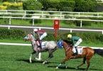 Sportbetting paardenrace